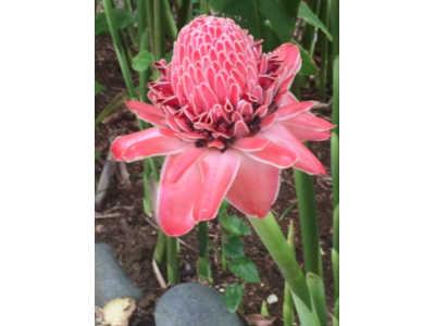 Jardin botanique fleur