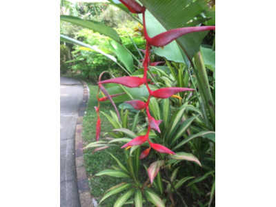 Jardin botatique fleur