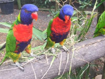 Jardin botanique perroquets